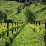 Wrights Valley Vineyard Certified Organic