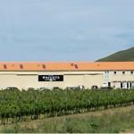 Coast Vineyard Winery Gisborne Tours Organic