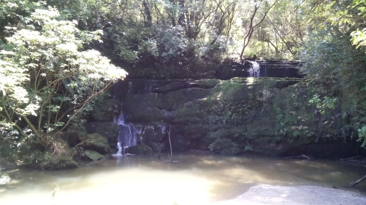 Waihirere Water Fall Bush Walk Gisborne Reserve
