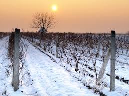 mid winter wine sale