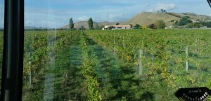 vineyard from tractor